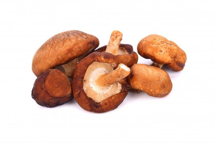 Jamur shiitake