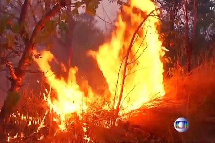 Kebakaran hutan Amazon, Brazil.
