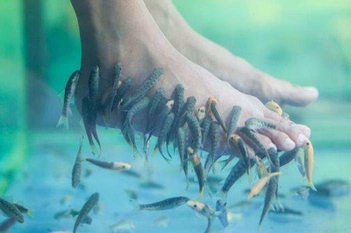 Spa Ikan