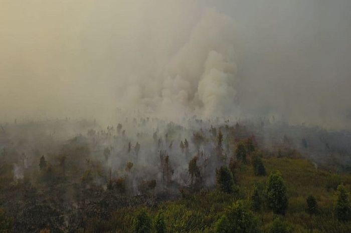 Kebakaran hutan di Palangkaraya.