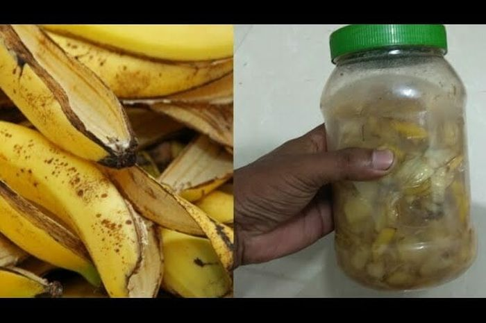 Kulit pisang disimpan dalam toples.