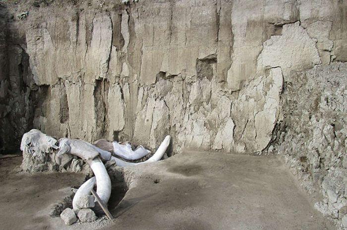 Penemuan tulang mamut di Meksiko.