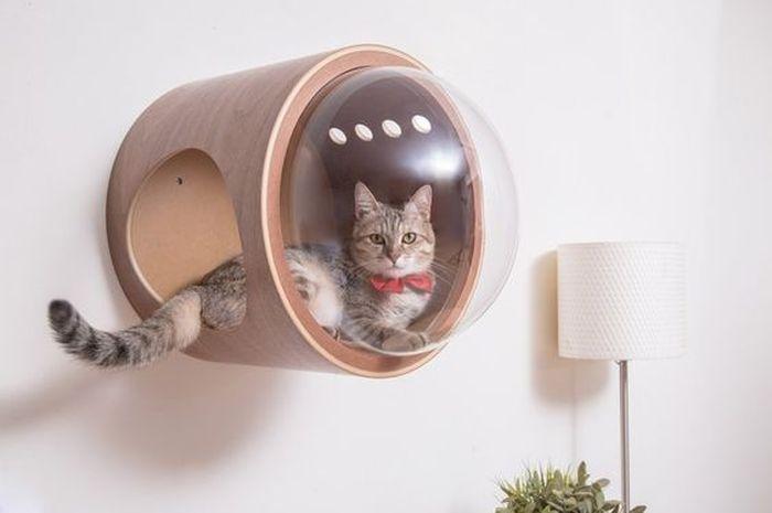 Waspadai Inilah Jenis Penyakit Mematkan Yang Sering Dialami Kucing Semua Halaman Idea