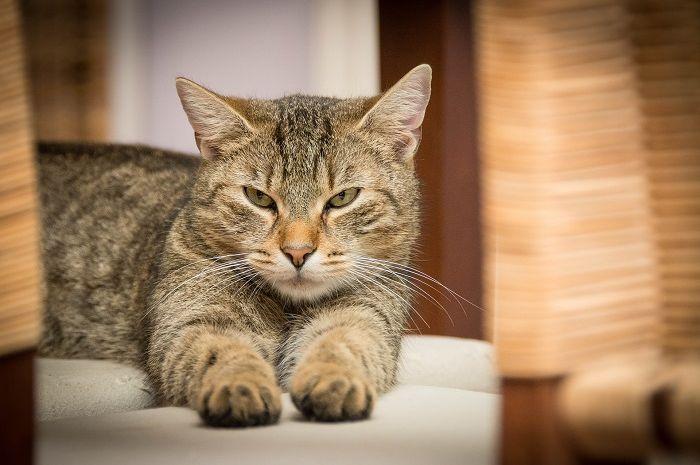 Seekor kucing dikabarkan menyekap pemiliknya di dapur selama 2 hari.