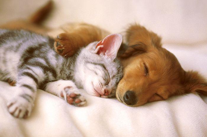 Hal-Hal Ini Bisa Berbahaya Untuk Anjing dan Kucing Peliharaan, Pendingin Ruangan Ternyata Masuk!
