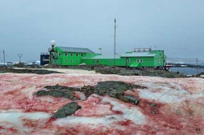 Salju berwarna merah di sekitaran  Pangkalan Penelitian Vernadsky, Antartika.