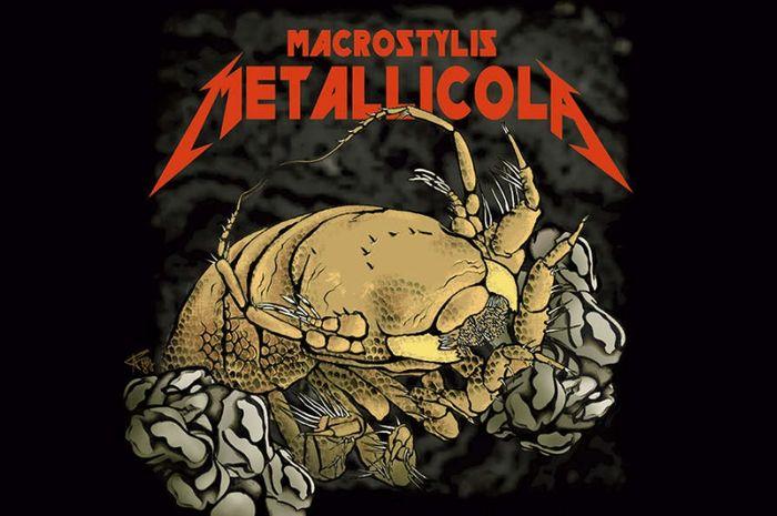 Gambar ilustrasi dari Macrostylis Metallicola. Krustasea spesies baru yang dinamai dari group band Metallica.