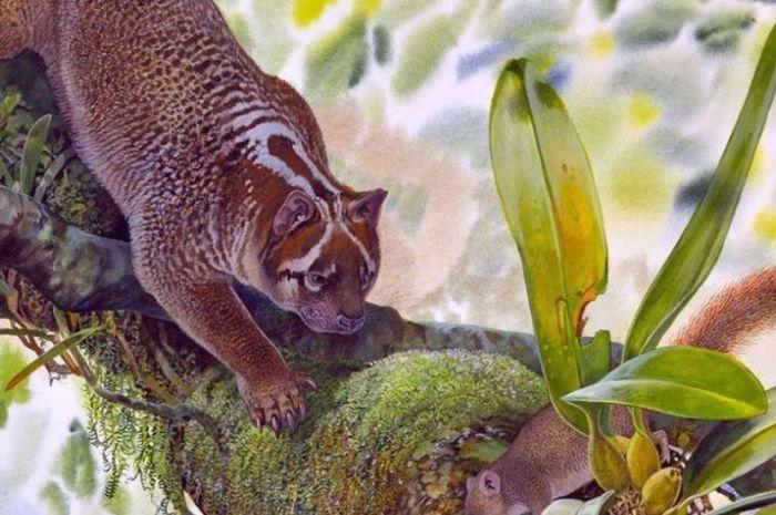 Ilustrasi dari Lekaneleo roskellyae, singa berkantung spesies baru.
