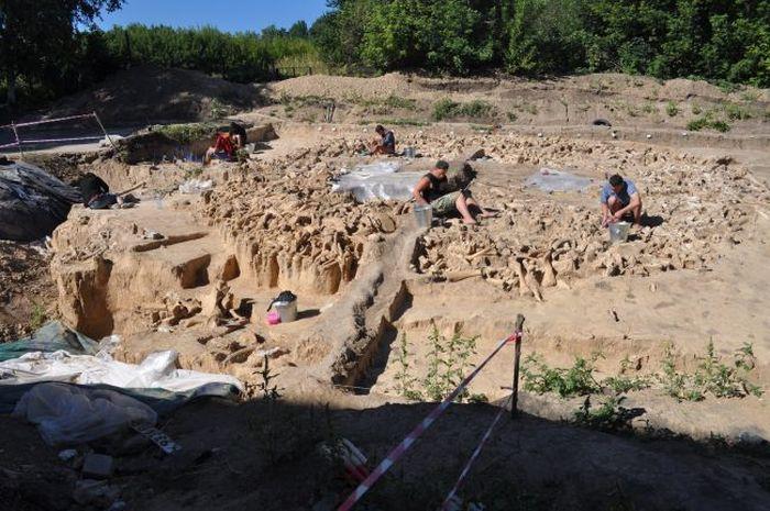 Para arkeolog meneliti susunan tulang yang berbentuk lingkaran yang terdiri dari tulang 60 ekor mamut