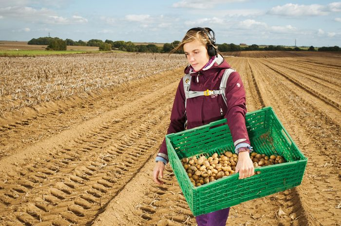Di wilayah Picardy, Prancis, seorang relawan membantu memungut 500 kilogram kentang yang terlalu kecil untuk dipanen menggunakan mesin. Kentang-kentang ini akan bergabung bersama wortel, terung, dan sayur mayur pungutan dan sumbangan lainnya di Place de la République, Paris. Di sana para relawan ya