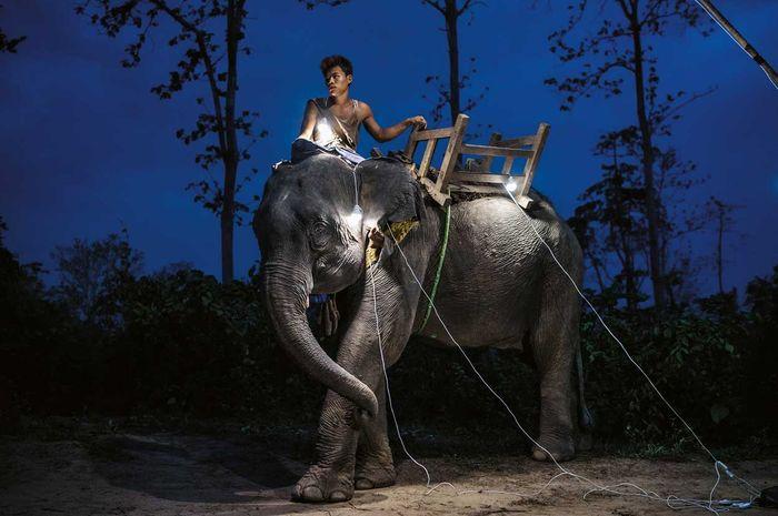 Seorang buruh di kamp penebangan kayu di wilayah Bago, Myanmar, menunggangi gajahnya yang berusia 11 tahun. Gajah telah digunakan selama berabad-abad oleh penebang kayu di sana. Para buruh di kamp ini tidak memiliki listrik, sehingga mereka menggunakan lentera tenaga surya sebelum matahari terbit.