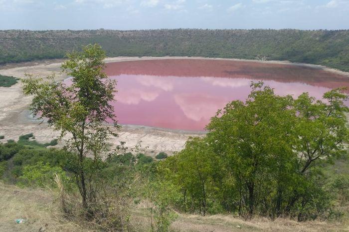 Warna danau Lonar berubah menjadi pink.