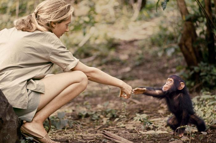 Flint adalah bayi pertama yang lahir di Gombe setelah Jane datang. Bersamanya dia memiliki kesempatan besar untuk mempelajari perkembangan simpanse — dan untuk melakukan kontak fisik, yang tidak lagi dianggap sesuai dengan simpanse di alam.