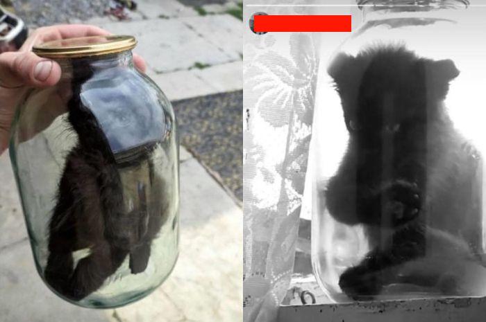 Potongan video anak kucing dimasukkan toples