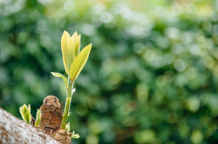Apa Itu Perkembangbiakan Vegetatif Alami Dan Perkembangbiakan Vegetatif Buatan Pada Tumbuhan Semua Halaman Kids