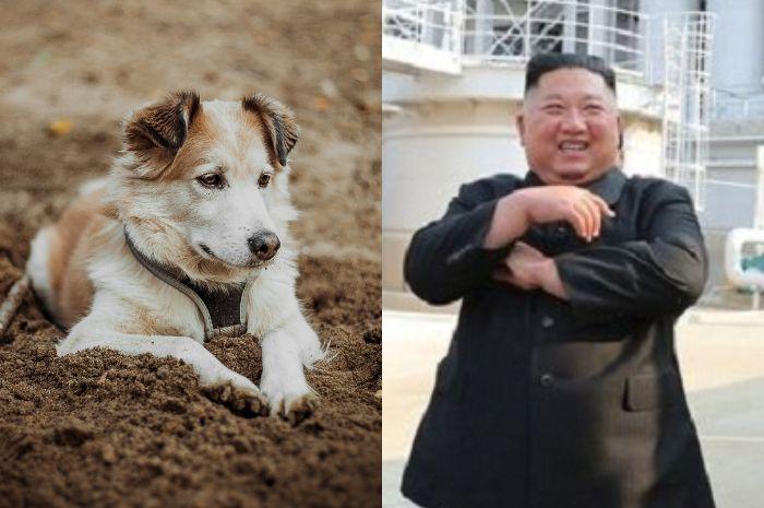 Stok Makanan Makin Menipis, Kim Jong Un Buru Anjin