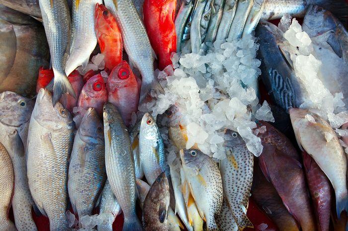 Ilustrasi ikan laut, salah satu hasil dari sumber daya alam yang bisa diperbarui jika dikelola dengan baik