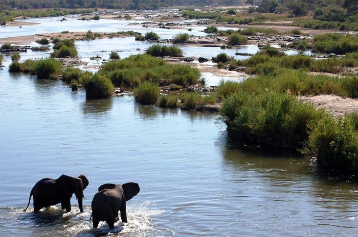Taman Nasional Kruger.