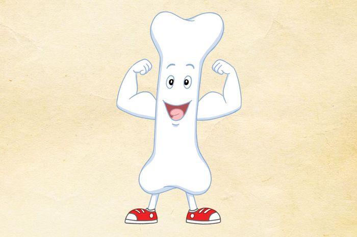 Tulang paha adalah tulang terpanjang.