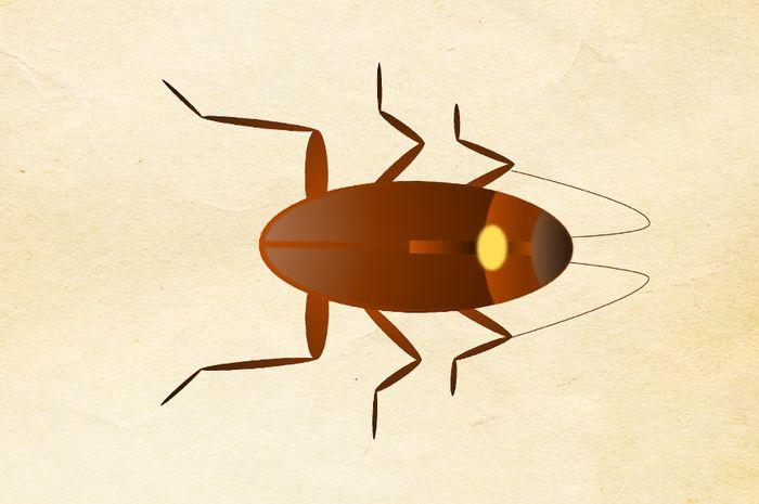 Ternyata, serangga yang sering dianggap menjijikkan dan menakutkan ini punya fakta unik yang jarang diketahui, lo.