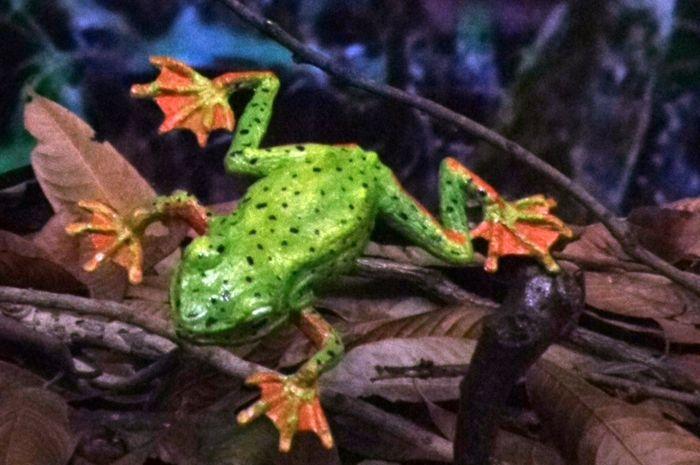 Mengapa katak berbunyi ketika hujan turun?