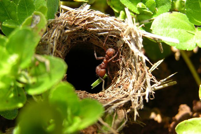 Mengintip Ruangan di Dalam Sarang Semut