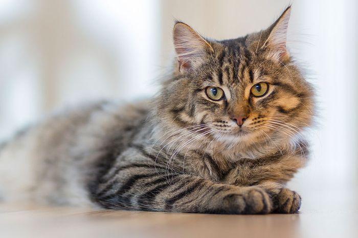 Ketahui Hal Ini Sebelum Memelihara Kucing