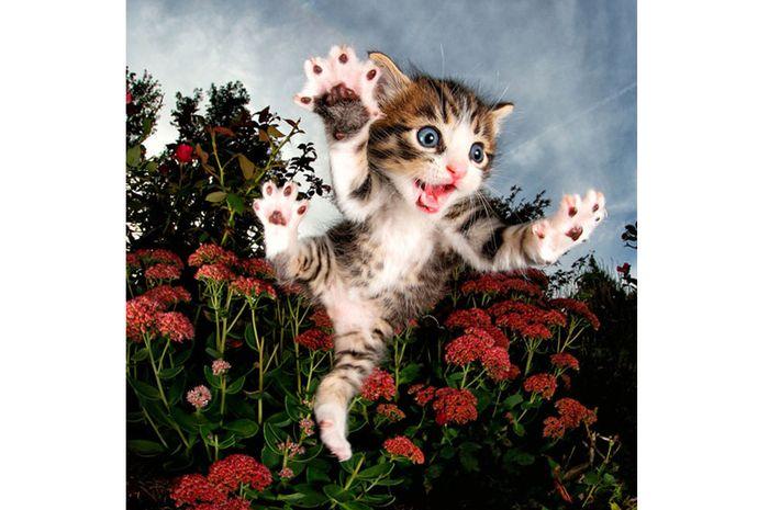 Anak kucing.
