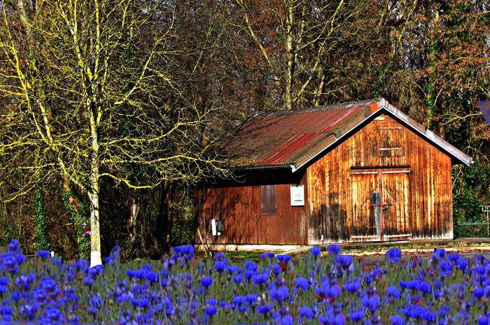 Bunga Biru dan Kastil Es