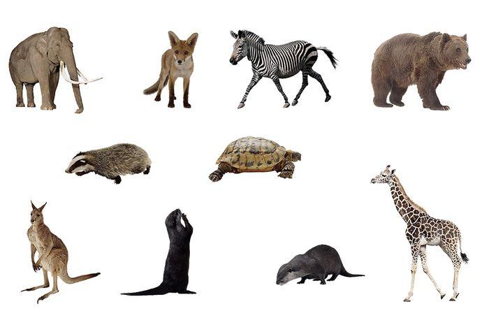 Fakta seputar hewan di berbagai belahan dunia.