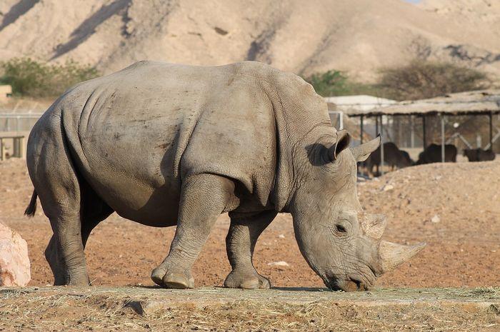 Kadang hewan bisa lebih cepat mati di alam liar daripada di tempat konservasi.