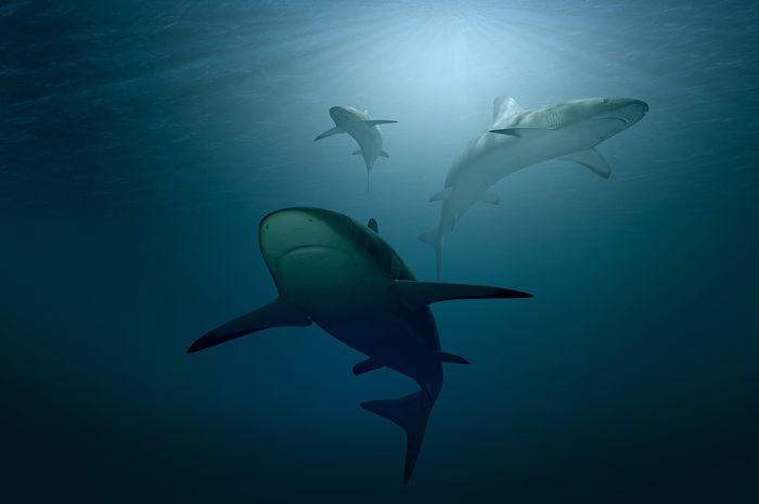 Hanya sekitar sepuluh spesies hiu yang dianggap berbahaya bagi manusia.