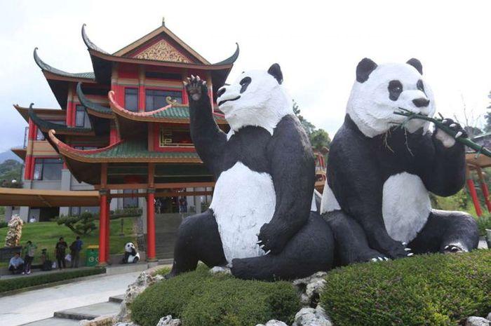 Inilah Harga Tiket Untuk Melihat Panda Di Taman Safari