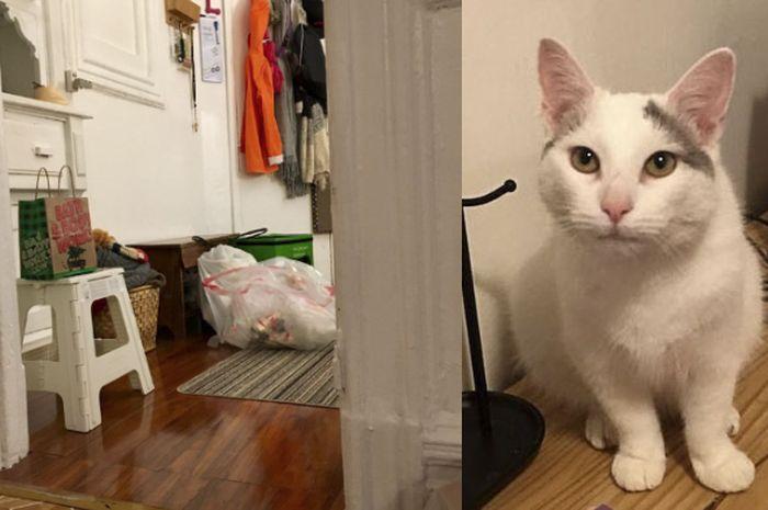 Download 95+  Gambar Kucing Yang Imut Banget Paling Bagus