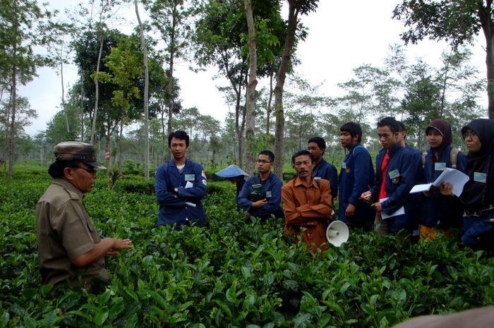 Jurusan Agribisnis Belajar Pertanian Titelnya Ekonomi Semua