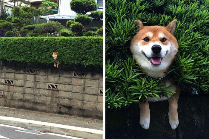 Bikin Ketawa, Ini 4 Foto Yang Menampilkan Tingkah Kocak Anjing Peliharaan