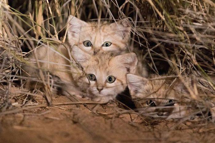 Kenapa Kucing Selalu Mati di Tempat yang Sepi? - Hai Grid ID