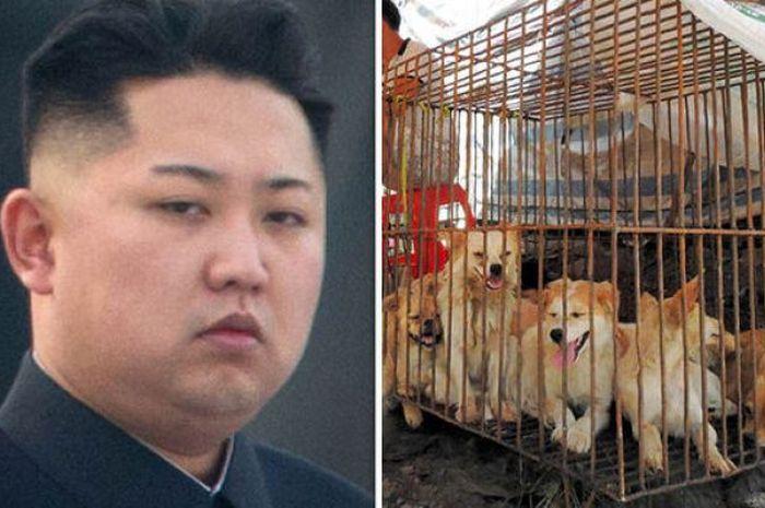 Kim Jong Un minta rakyatnya makan daging anjing