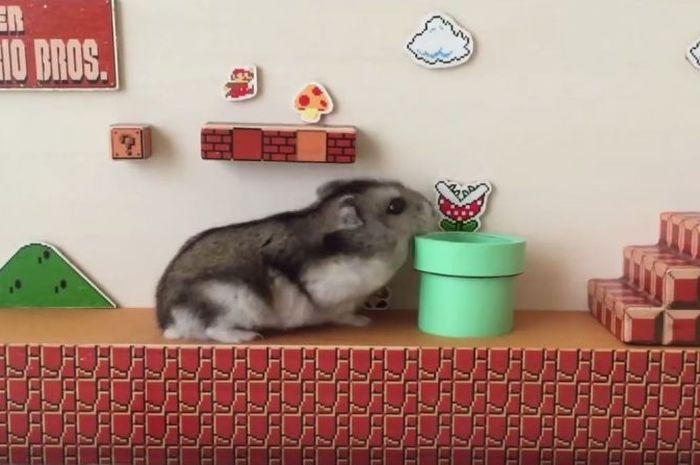 Hamster main Super Mario Bros