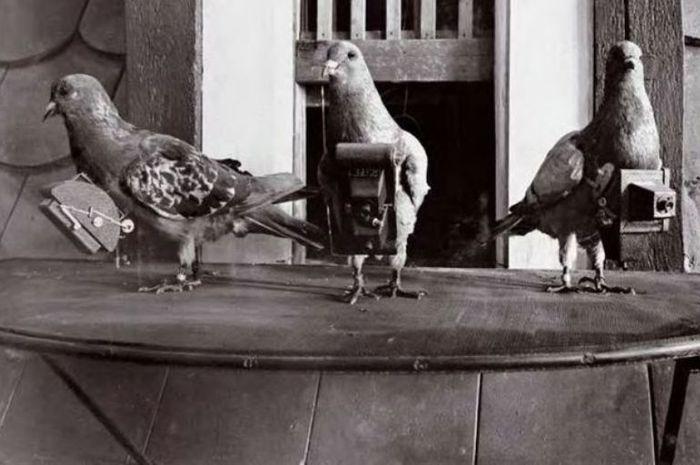 Merpati pos menanti penugasan foto mereka yang selanjutnya