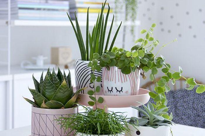 Rak tanaman model tangga membuat sudut lebih cantik