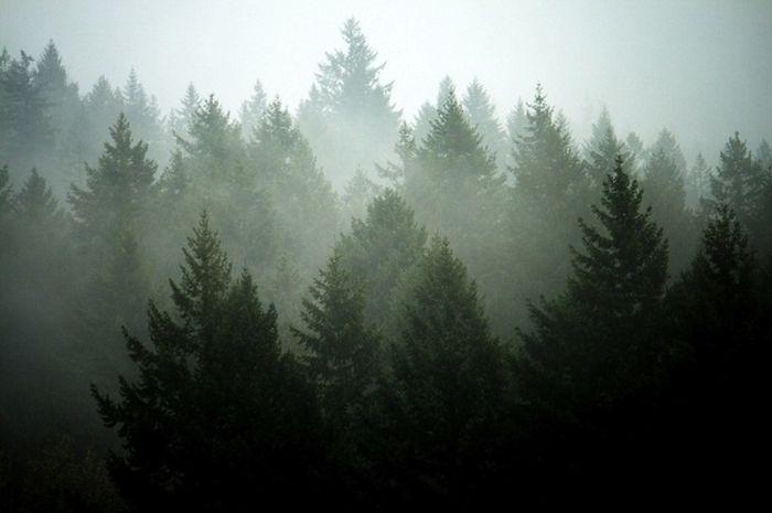 Menurut Giometto, memangkas seluruh pohon dapat memberikan perasaan berbeda pada seseorang yang berjalan.