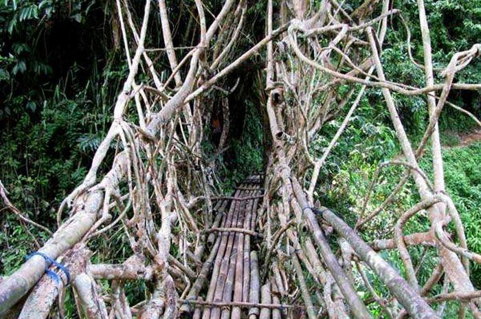Ada Jembatan dari Akar Melilit di Banten