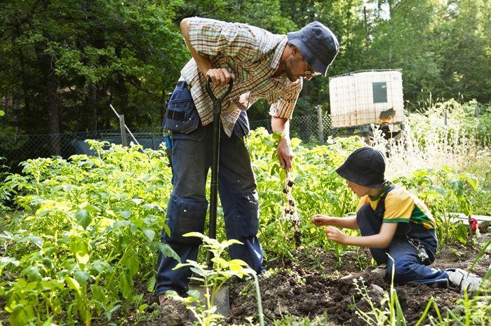 5 Tips Memulai Berkebun Sayur Sendiri - Semua Halaman - Intisari