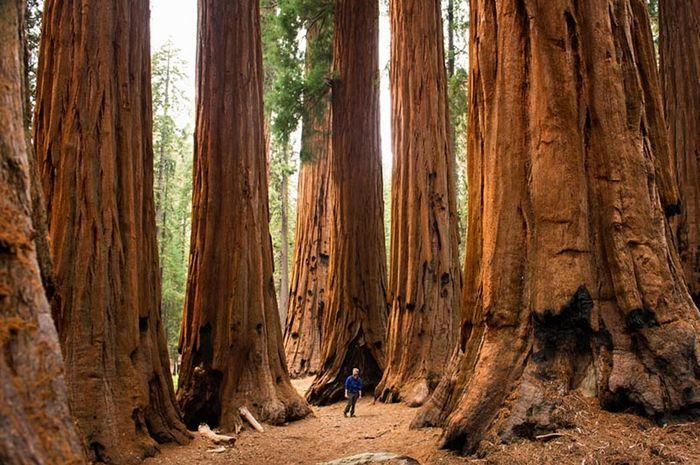 8 Hutan Tercantik di Dunia (1)