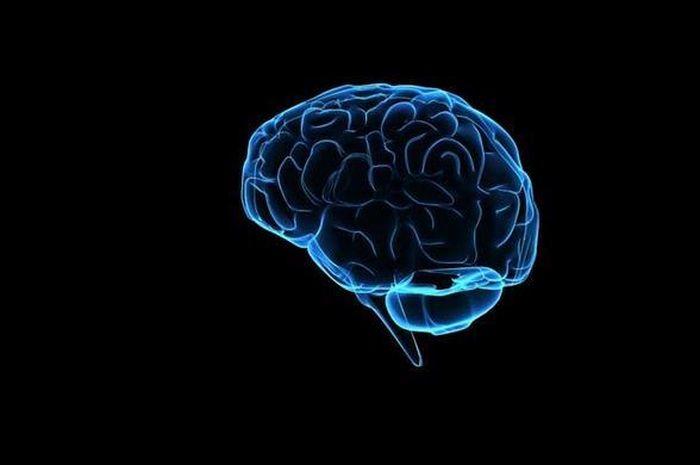 Kali Ini, Giliran Otak yang Dijual di eBay