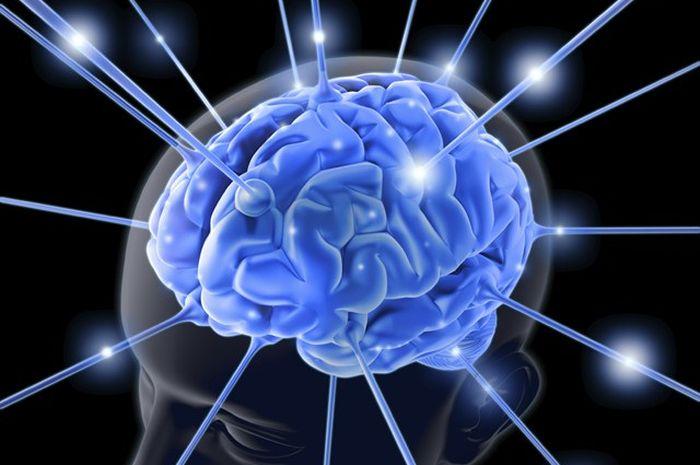 Hasil gambar untuk perkembangan otak