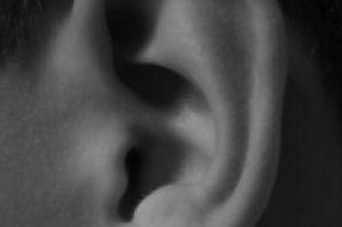 Tinnitus, Telinga Berdenging