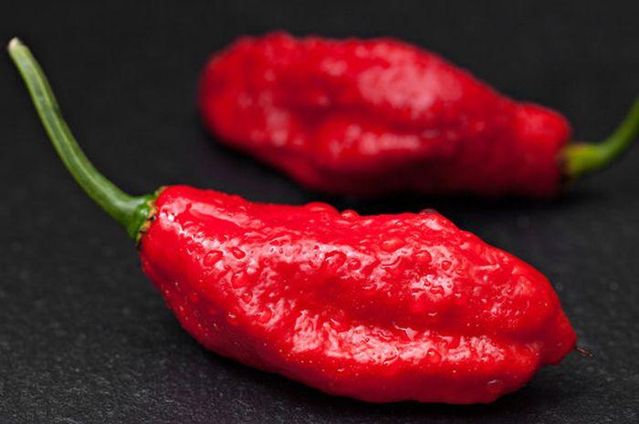 Ghost peppers, cabai terpedas di dunia.