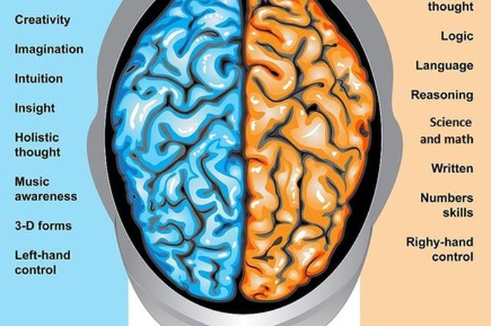 Otak terbagi menjadi dua, kiri dan kanan